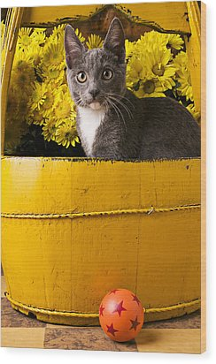Gray Kitten In Yellow Bucket Wood Print by Garry Gay