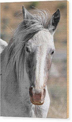 Wood Print featuring the photograph Gray Mare by Lula Adams