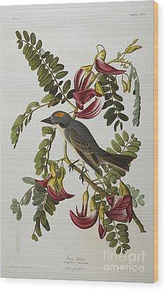 Gray Tyrant Wood Print by John James Audubon