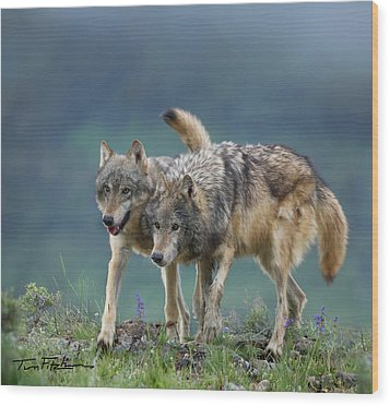 Gray Wolves Wood Print by Tim Fitzharris