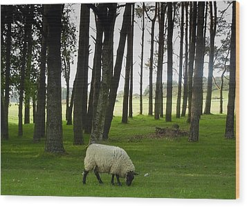 Grazing In The Woods Wood Print