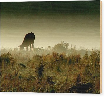 Grazing On A Misty Morning Wood Print by Kimberly Camacho