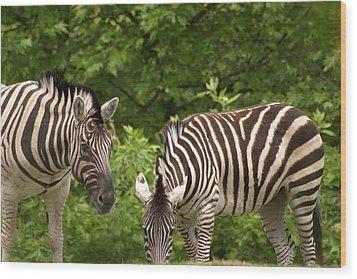Grazing Zebras Wood Print by Sonja Anderson