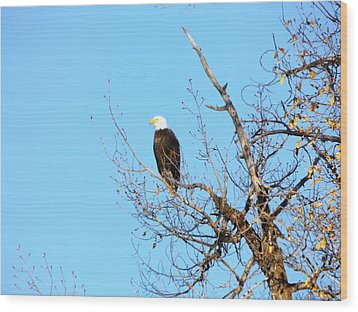 Great American Bald Eagle Wood Print