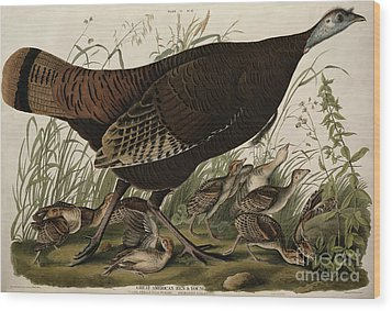 Great American Hen And Young Wood Print by John James Audubon