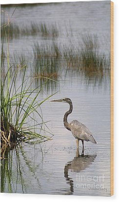 Wood Print featuring the photograph Great Blue by Dodie Ulery