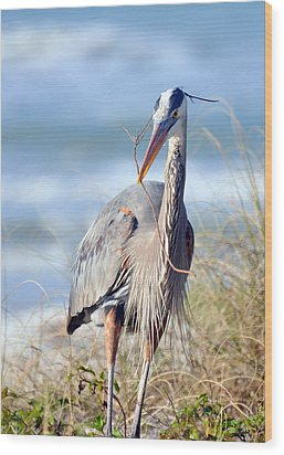 Great Blue Heron - Nesting Wood Print by Rose  Hill