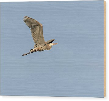 Wood Print featuring the photograph Great Blue Heron 2015-17 by Thomas Young