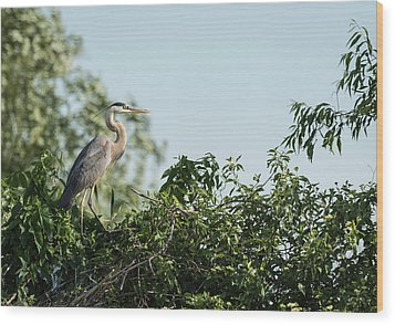 Wood Print featuring the photograph Great Blue Heron  2015-18 by Thomas Young