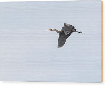 Great Blue Heron 2017-1 Wood Print by Thomas Young