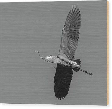 Great Blue Heron 2017-2 Wood Print by Thomas Young