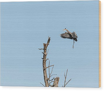 Great Blue Heron 2017-3 Wood Print by Thomas Young