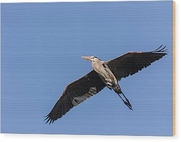 Great Blue Heron 2017-6 Wood Print by Thomas Young