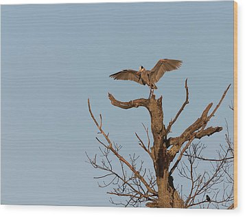 Great Blue Heron 2017-7 Wood Print by Thomas Young