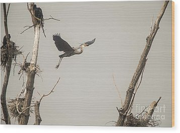 Wood Print featuring the photograph Great Blue Heron - 6 by David Bearden