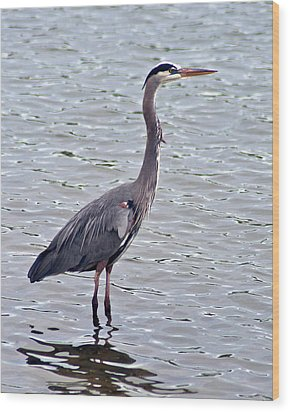 Great Blue Heron Wood Print by Bill Barber