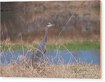 Wood Print featuring the photograph Great Blue Heron By The River by Sharon Talson