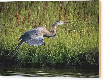 Great Blue Heron Wood Print by Cathy Cooley