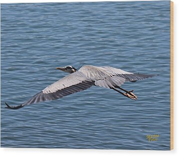 Great Blue Heron Flying Over Morro Bay Wood Print