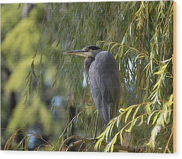 Great Blue Heron In A Willow Tree Wood Print