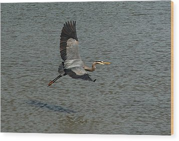 Wood Print featuring the photograph Great Blue Heron In Flight by Kathleen Stephens