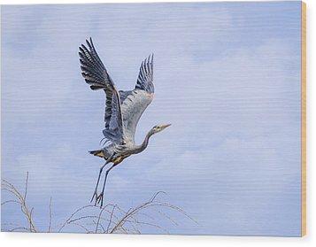 Great Blue Heron In Flight Wood Print by Keith Boone