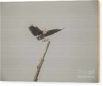 Wood Print featuring the photograph Great Blue Heron Landing by David Bearden