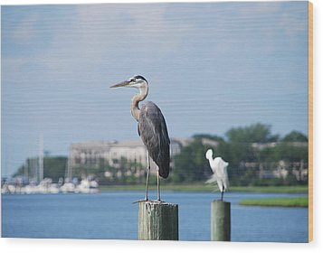 Wood Print featuring the photograph Great Blue Heron by Margaret Palmer