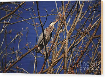 Wood Print featuring the photograph Great Blue Heron Nesting 2017 - 1 by Terry Elniski