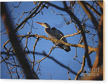 Wood Print featuring the photograph Great Blue Heron Nesting 2017 - 2 by Terry Elniski