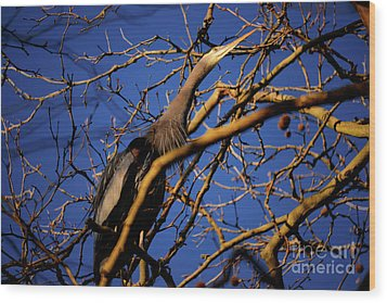Wood Print featuring the photograph Great Blue Heron Nesting 2017 - 3 by Terry Elniski