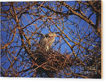 Wood Print featuring the photograph Great Blue Heron Nesting 2017 - 4 by Terry Elniski