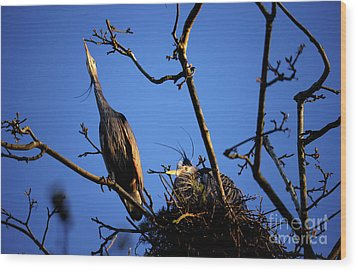 Wood Print featuring the photograph Great Blue Heron Nesting 2017 - 5 by Terry Elniski