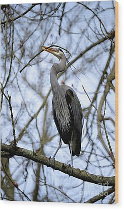 Wood Print featuring the photograph Great Blue Heron Nesting 2017 - 6 by Terry Elniski