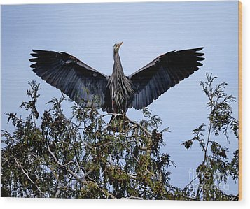 Wood Print featuring the photograph Great Blue Heron Nesting 2017 - 7 by Terry Elniski