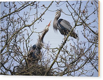 Wood Print featuring the photograph Great Blue Heron Nesting 2017 - 8 by Terry Elniski
