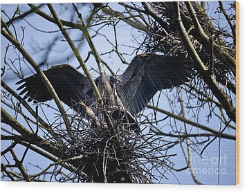 Wood Print featuring the photograph Great Blue Heron Nesting 2017 - 9 by Terry Elniski