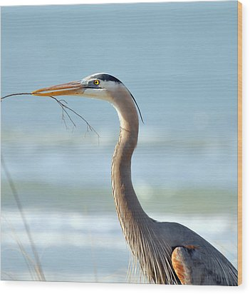 Great Blue Heron Nesting Wood Print