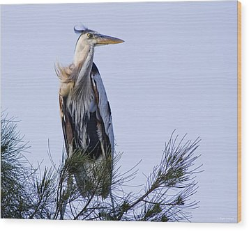 Great Blue Heron On A Windy Day Wood Print by Roger Wedegis