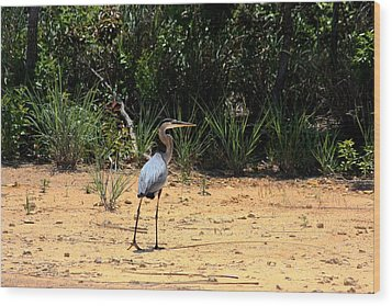 Wood Print featuring the photograph Great Blue Heron On Beach by Sheila Brown
