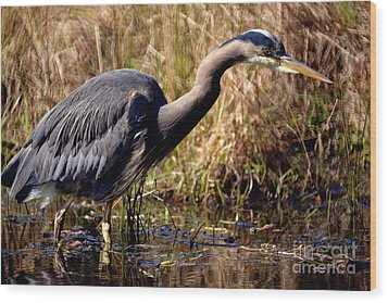 Wood Print featuring the photograph Great Blue Heron On The Hunt 1 by Terry Elniski