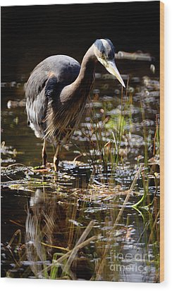 Wood Print featuring the photograph Great Blue Heron On The Hunt 2 by Terry Elniski
