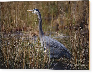 Wood Print featuring the photograph Great Blue Heron On The Hunt 3 by Terry Elniski