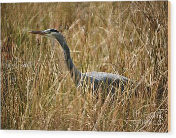 Wood Print featuring the photograph Great Blue Heron On The Hunt 4 by Terry Elniski