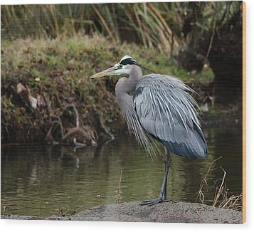 Wood Print featuring the photograph Great Blue Heron On The Watch by George Randy Bass