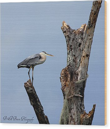Wood Print featuring the photograph Great Blue Heron Perched by Barbara Bowen