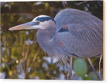 Great Blue Heron Wood Print by Rich Leighton