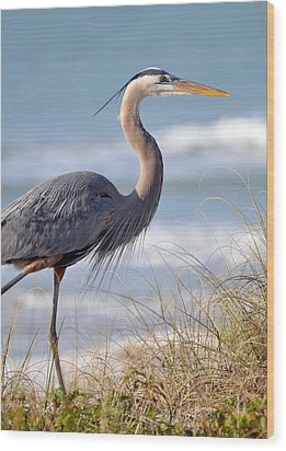 Great Blue Heron Wood Print by Rose  Hill