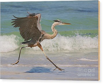 Great Blue Heron Running In The Surf Wood Print by Myrna Bradshaw
