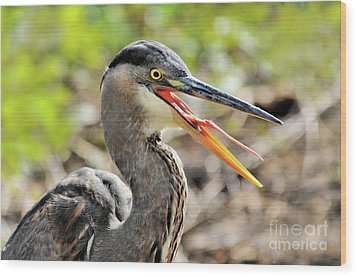 Great Blue Heron Tongue Wood Print by Debbie Stahre